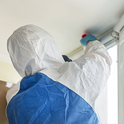 Pest Control Services in t nagar